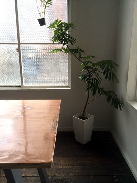 ねむの木 エバーフレッシュ