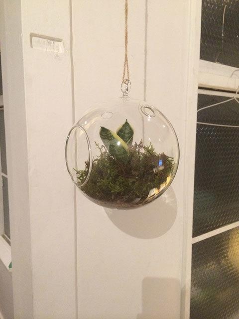 吊 観葉植物 水耕栽培