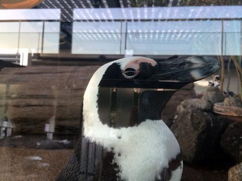 京都 水族館 ペンギン
